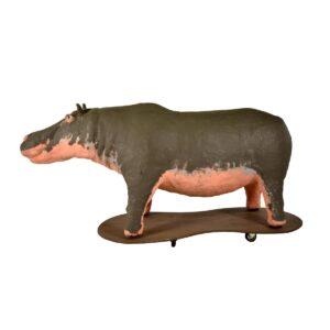Animal - Life Size Hippopotamus