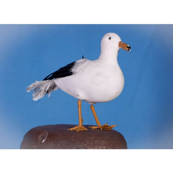 Seagull-10798