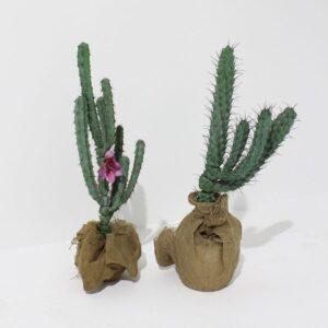 Medium Cactus-0