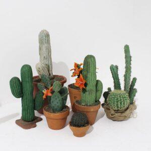 Small Cactus-0