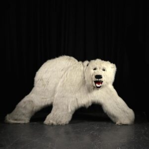 Cutout - Polar Bear with Fur Facing Front