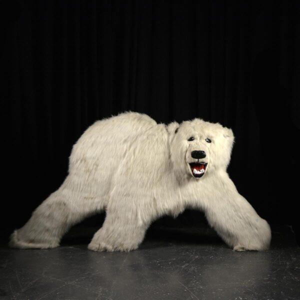 Cutout - Polar Bear with Fur Facing Front