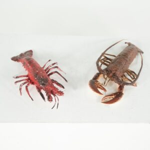 lobster for hire - sydney props