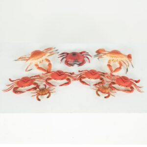 crab for hire - sydney props