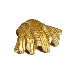 Golden Sea Shell-0