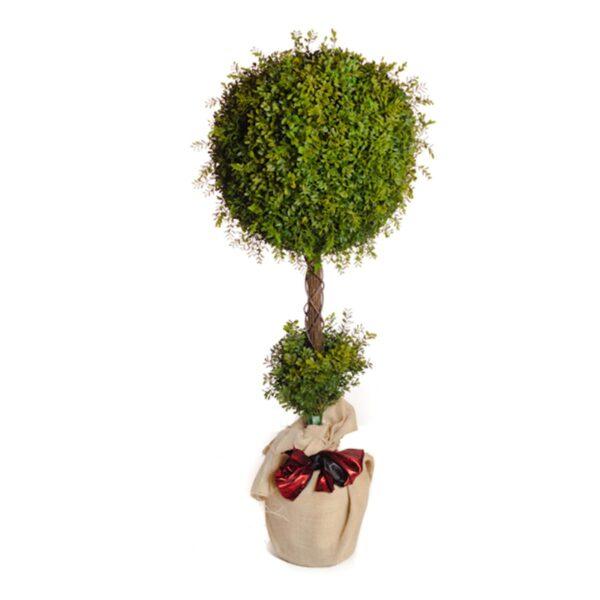 Tall Topiary Tree