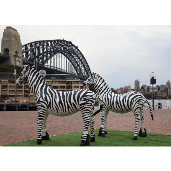 Zebras and the Habour Bridge