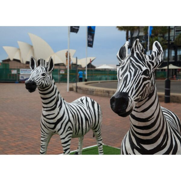 Zebras and the Opera House