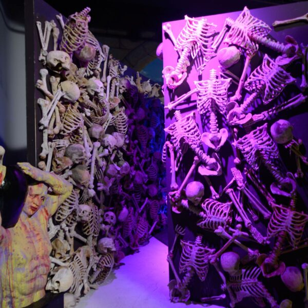 Skull / Skeleton Flats - Sydney Prop Specialists - Prop Hire and Event Theming