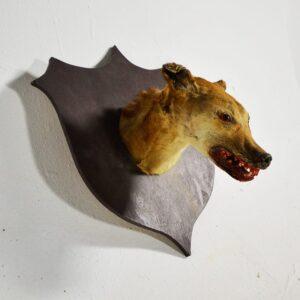 Animal - Mounted Doghead