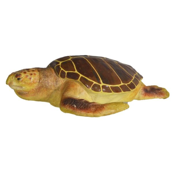 Animal - Life-size Turtle
