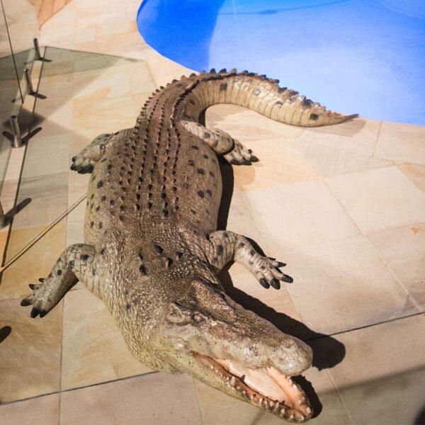 Life Size Crocodile-0