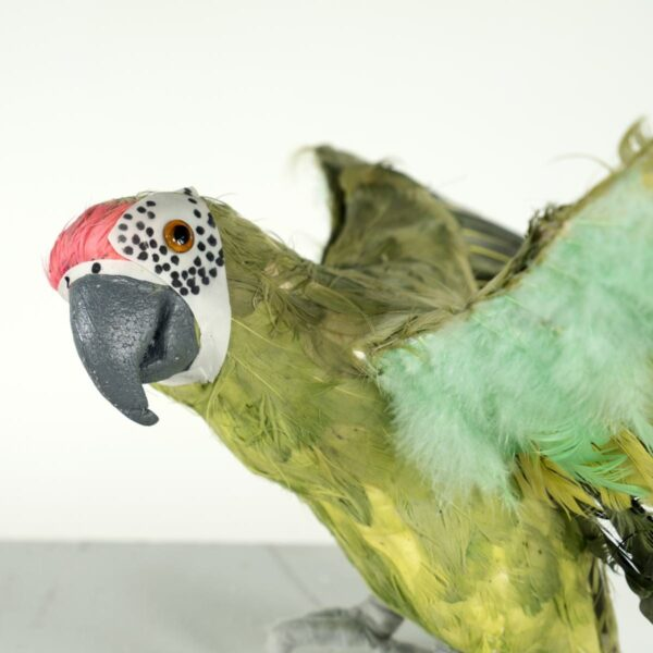 green parrot for hire - sydney props