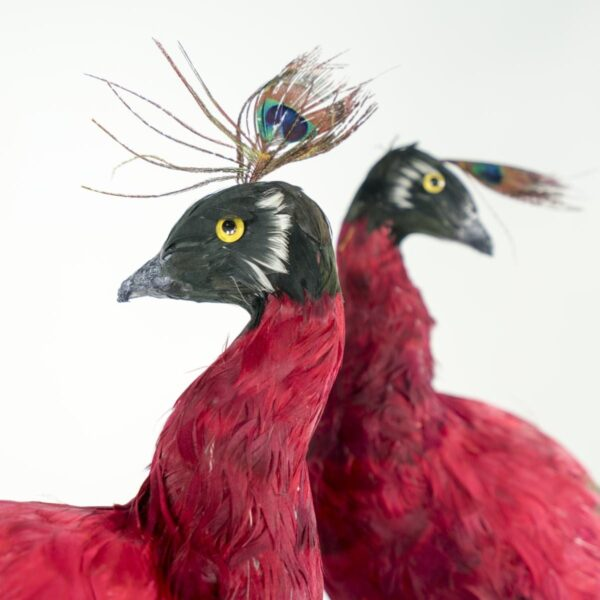 red peacock for hire - sydney props