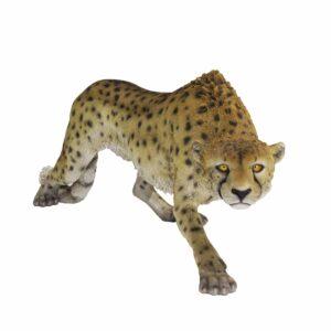 Cheetah -0