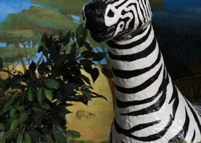 Safari Theme - Sydney Prop Specialists