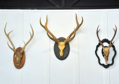 Taxidermy and Animal Trophies - Sydney Prop Specialists